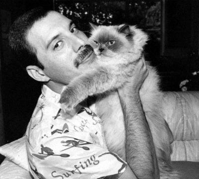 CAT FREDDIE