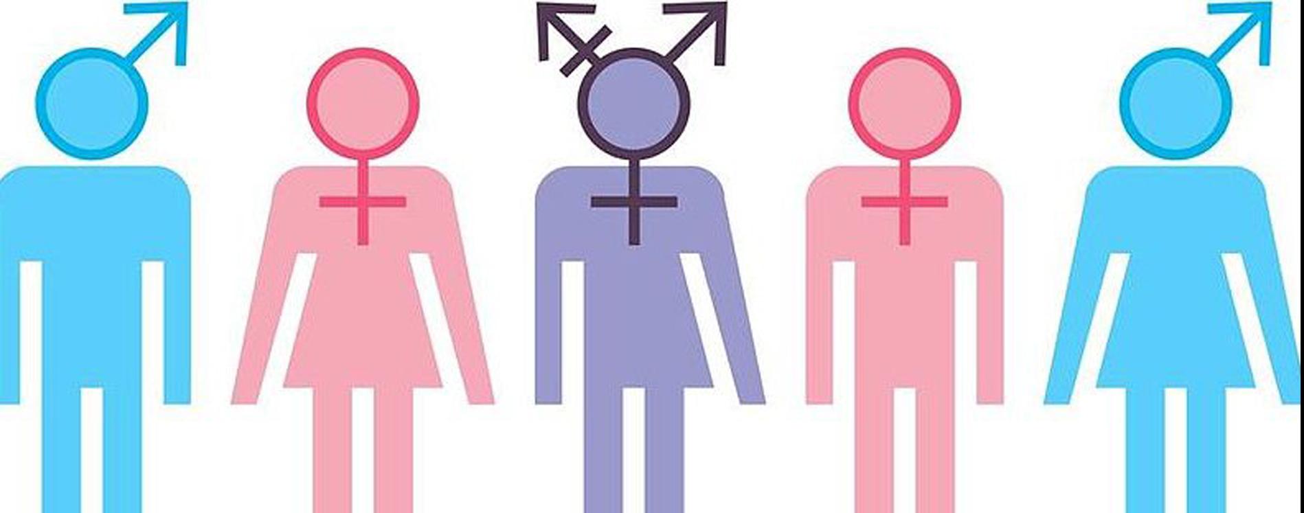 ley de género