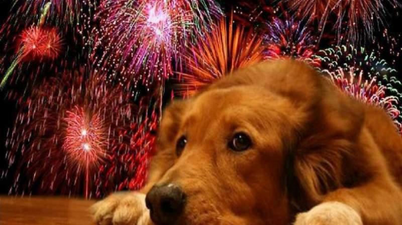 Por Los Animales La Florida Suspende Fuegos Artificiales De Ano Nuevo