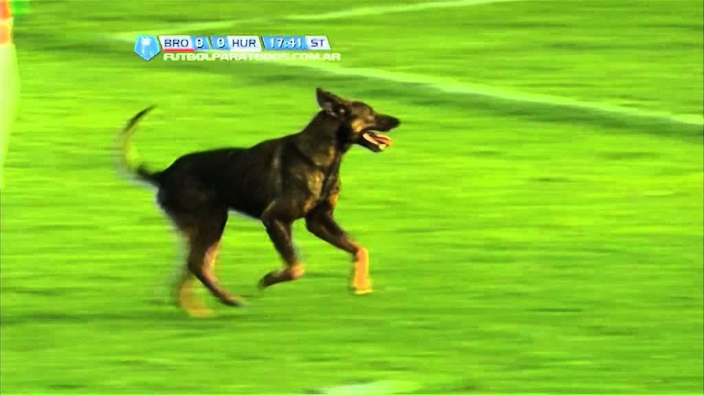 No es gol por culpa de un 'espontáneo', un perro