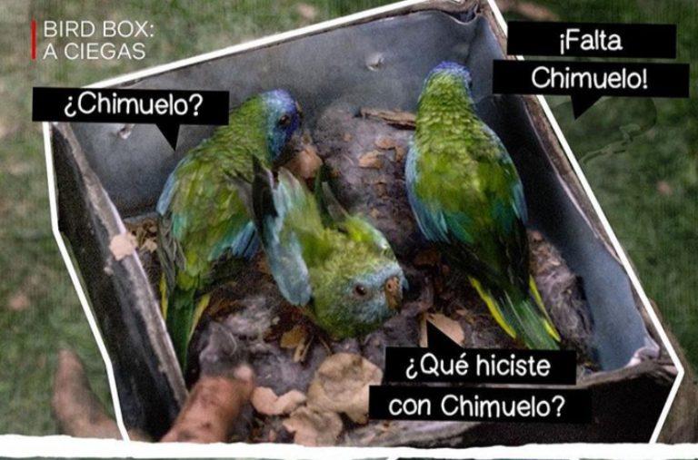 netflix chimuelo