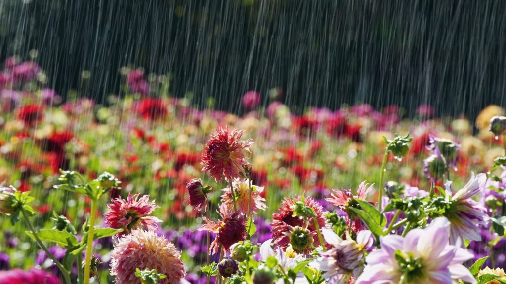 lluvia enero region metropolitana