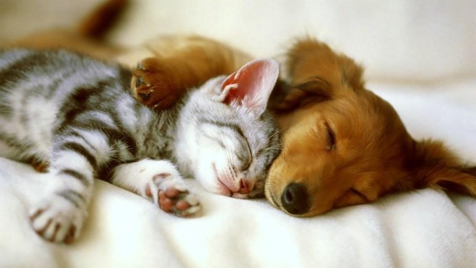 perros-y-gatos adopción