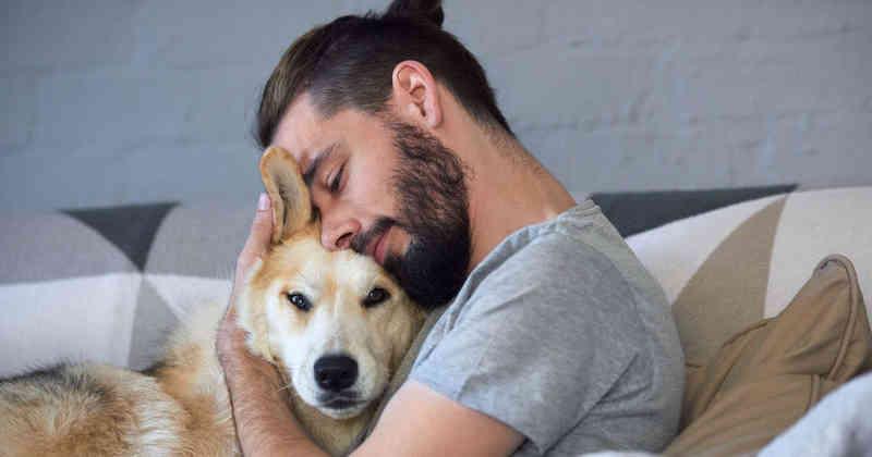 estrés perros
