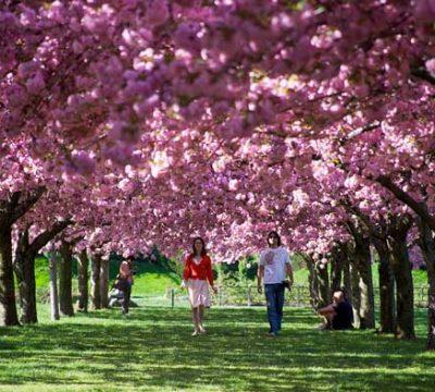 jardin botanico brooklyn
