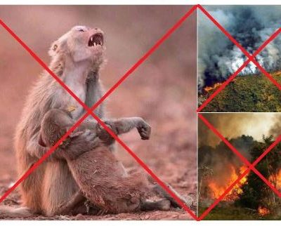 fotos falsas amazonas