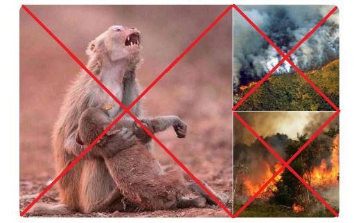Incendio en el Amazonas Captura-7