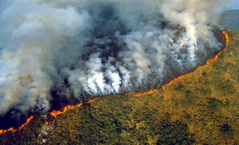 Resultado de imagen para amazonas incendios