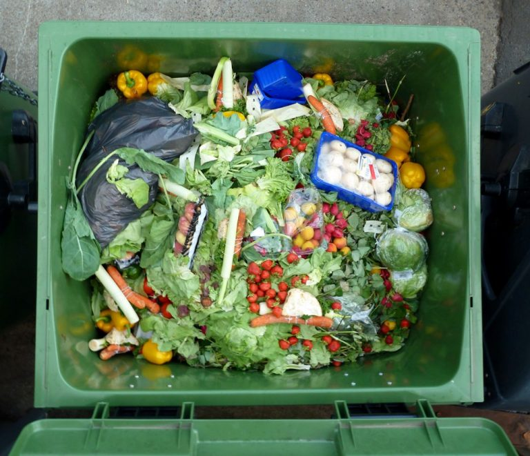 botar menos comida ayuda al planeta