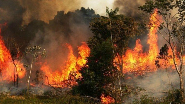 protestas por incendio amazonas