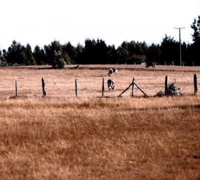 Emergencia agrícola RM