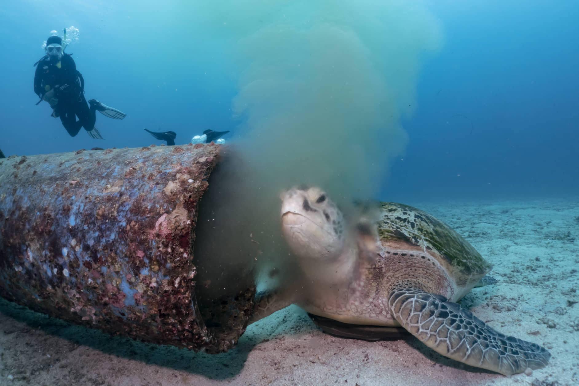 tortuga marina desechos