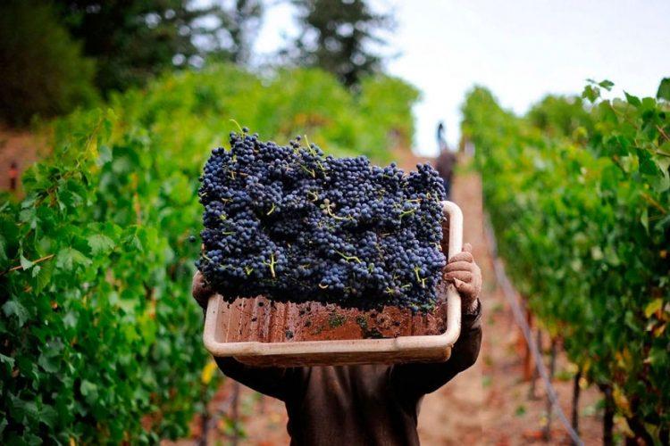 dia del vino 2019 ofertas descuentos panoramas portada