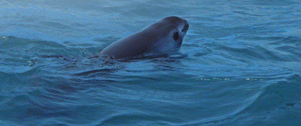 vaquita marina documental s o s mar de sombras nat geo