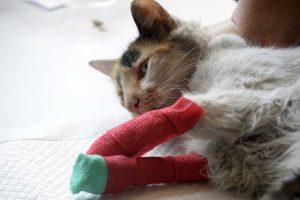 kit emergencia mascotas