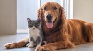 tenencia responsable de animales en navidad