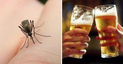 Mosquitos pican más a las personas que beben cerveza, según libro