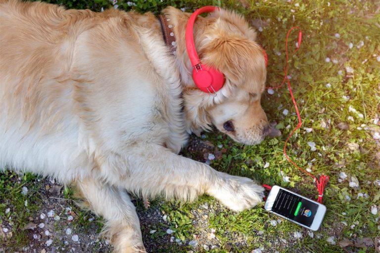 Spotify innova en el reino animal: ¡Podrás crear playlist para tu mascota!