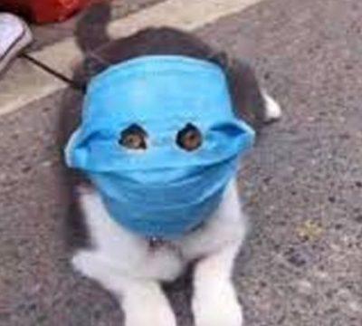 gato coronavirus 3