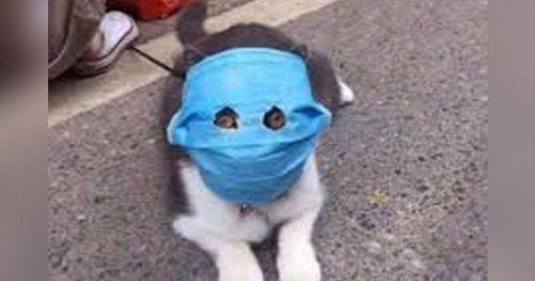 https://www.rockandpop.cl/wp-content/uploads/2020/02/gato-coronavirus-768x404.jpg