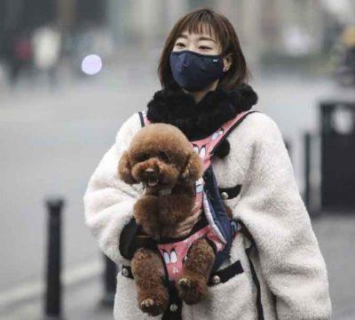 Coronavirus: Crean brigada de rescate mascotas abandonadas en Wuhan