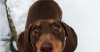 Perro está tan feliz de que sus dueños estén en cuarentena que se lesiona
