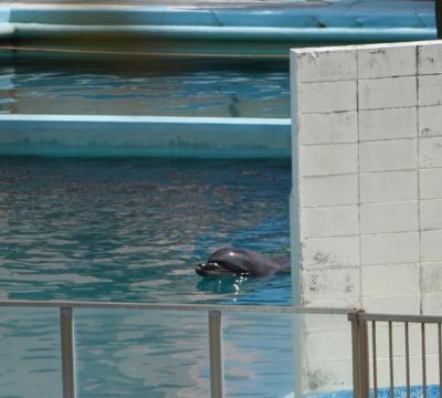 honey delfin fallecida en cautiverio