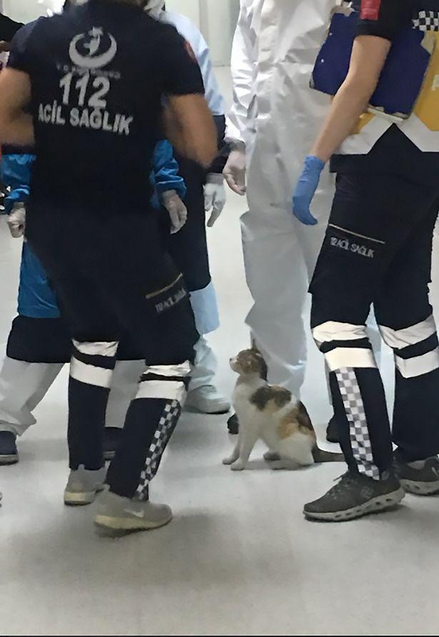 gato hospital estambul