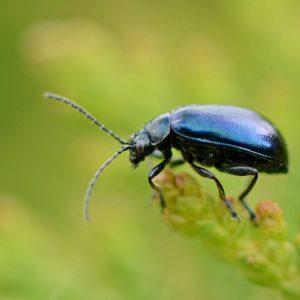 insectos en peligro