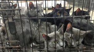 700 gatos enjaulados