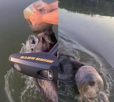 oso plastico cabeza