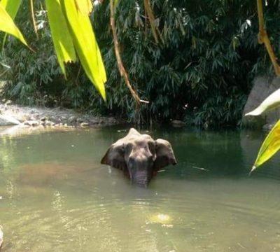 elefanta