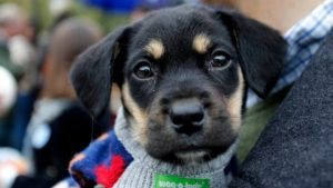 adopcion perros callejeros nuñoa cuarentena