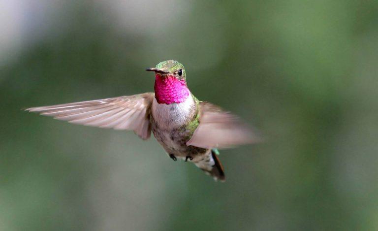colibríes vision