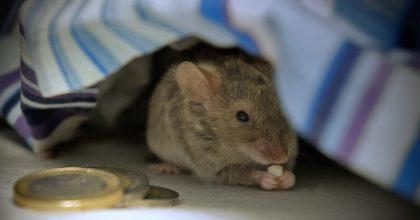 raton transantiago