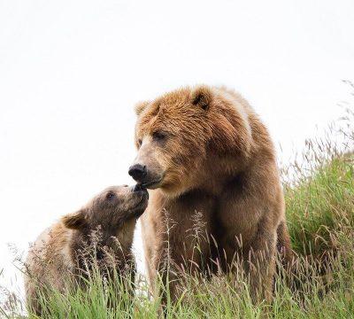 caza de osos