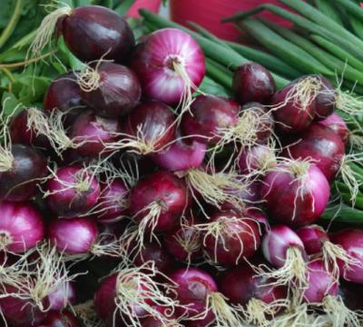 quercetina en cebolla covid19