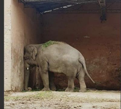 kavaan elefante