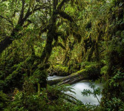 Bosques Valdivianos