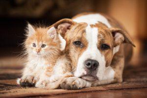En Perú la esterilización de perros y gatos podría ser obligatoria