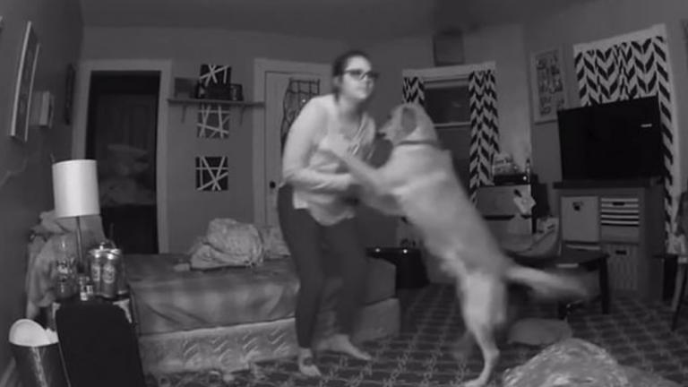 perro jax