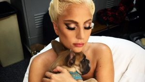 perritos de lady gaga