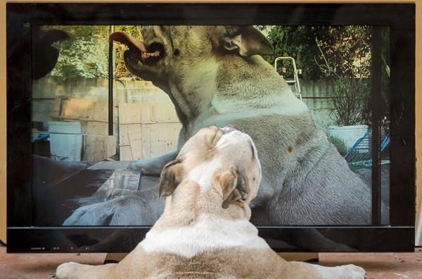 perro television