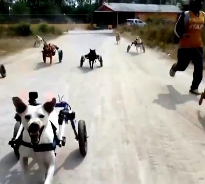 perritos discapacitados