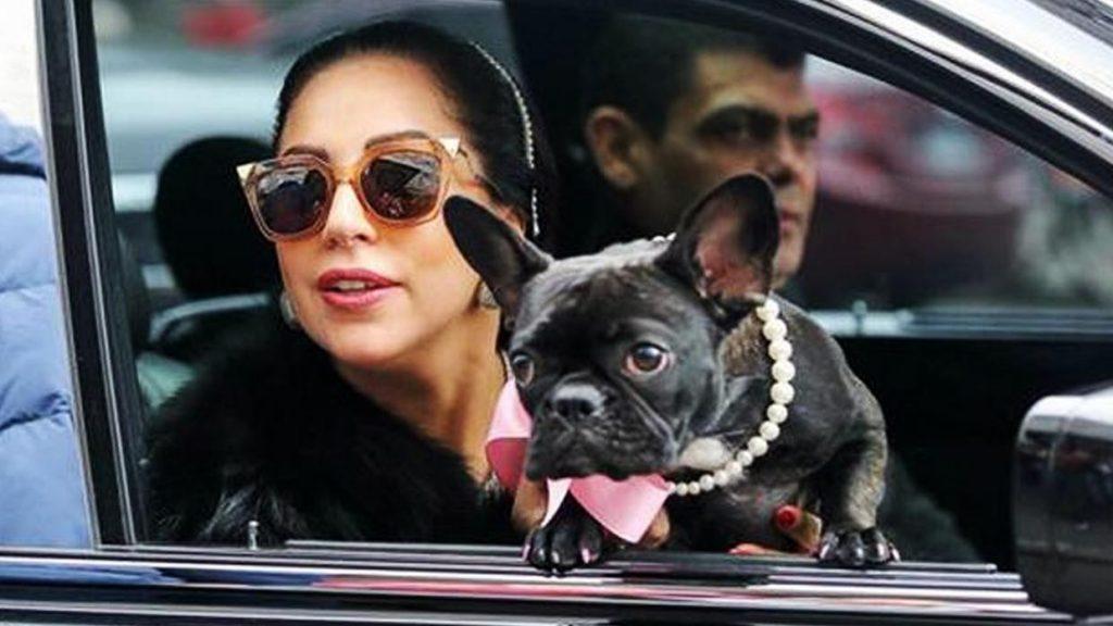 210225025333 Lady Gaga Roban Perros