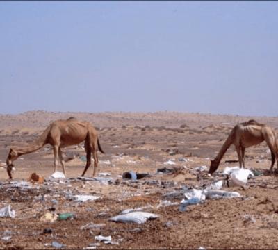 camellos plástico