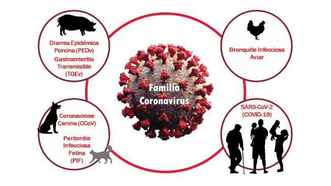 Familia Coronavirus