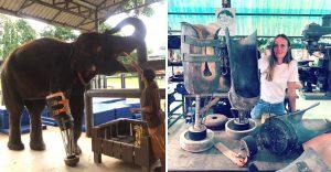 elefantes prótesis