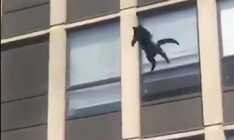 gato salta incendio