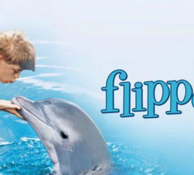 Flipper (1)